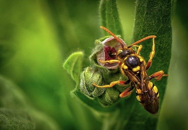 Wat Is Het Nut Van Wespen?
