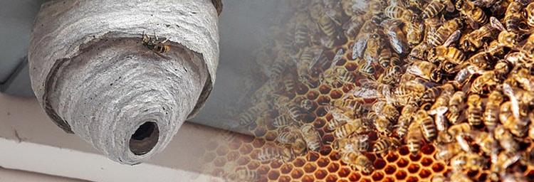 Verschil-wespennest-bijennest