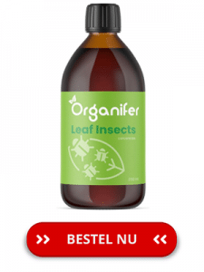 Organifer-leaf-insects